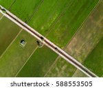 Aerial View   Green Paddy Fiel...