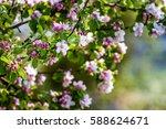cherry bloom | Shutterstock . vector #588624671