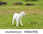 lonely newborn lamb calling for ... | Shutterstock . vector #58866908