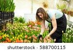 Woman Gardener With Garden...