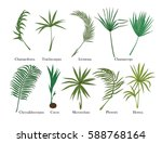 palm leaves set. colored.vector ...   Shutterstock .eps vector #588768164