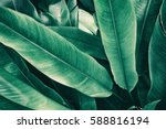 Tropical Leaves  Vintage Tone