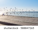 a group of doves flying at the...   Shutterstock . vector #588847265