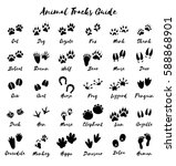 animal tracks   foot print... | Shutterstock . vector #588868901