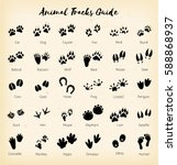 animal tracks   foot print... | Shutterstock .eps vector #588868937