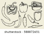 hand drawn sketch collection of ... | Shutterstock .eps vector #588872651