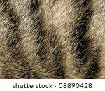 Fur Closeup Background.