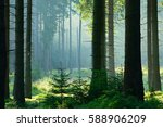 natural forest of spruce trees... | Shutterstock . vector #588906209