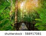 Walk Way Green Trees And Leaf...