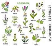 Cholagogue Herbs. Hand Drawn...