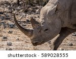 black rhino portrait | Shutterstock . vector #589028555