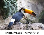 Beautiful Tucan Sitting On A...
