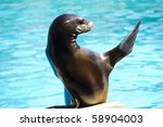 beautiful sea lion in a natural ... | Shutterstock . vector #58904003
