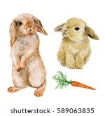 Stock photo set rabbit with carrot watercolor draw animal 589063835