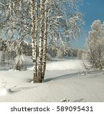 Small photo of Thin birches in deep snow on the background of hoary forest