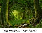 deep tropical jungles of... | Shutterstock . vector #589096601