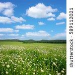 spring daisy flowers  in meadow.... | Shutterstock . vector #589112021