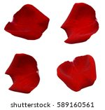 red rose petals isolated | Shutterstock . vector #589160561