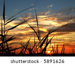 Beautiful sunset with bamboo and herb silhouettes - stock photo