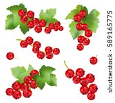 Red Currant Berries. Set Of...