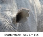 closeup of a rhino ear in south ... | Shutterstock . vector #589174115
