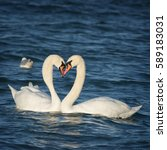 beautiful white swans floating... | Shutterstock . vector #589183031