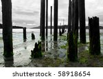 Pilings From An Old Pier.