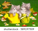 Cute Gray Kittens With Yellow...