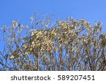 Leaves Dried On Tree Copy Space ...