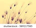grass flower in soft light blur ... | Shutterstock . vector #589217585