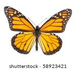 Stock photo monarch butterfly isolated on white background each with wing in ciritical focus 58923421