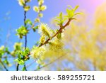 Spring Background   Yellow...
