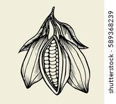 cocoa fetus yfnd drawn sketch... | Shutterstock .eps vector #589368239