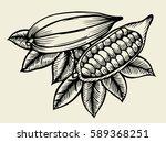 cocoa fetus yfnd drawn sketch... | Shutterstock .eps vector #589368251