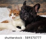 Stock photo cat and dog together cute pets portrait 589370777