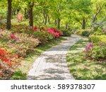 Rhododendron Simsii Garden.