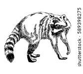 hand drawn vintage illustration ... | Shutterstock .eps vector #589398275