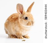 Stock photo red bunny with rabbit feed on white background 589403444