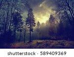 Magic Dark Forest. Autumn...