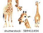 set of realistic giraffes made... | Shutterstock . vector #589411454
