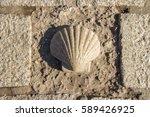 santiago shell  pilgrims shell  ... | Shutterstock . vector #589426925