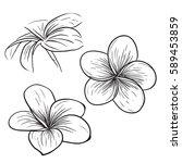 tropical flower  sketch style... | Shutterstock .eps vector #589453859