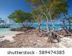mangroves at caribbean seashore ...   Shutterstock . vector #589474385
