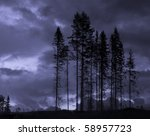 Scary landscape with dark trees in the evening - stock photo