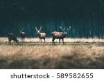 group of red deer standing in... | Shutterstock . vector #589582655