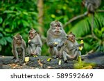 Adult Monkeys Sits And Eating...