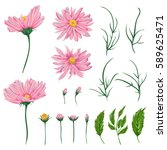 pink chamomile flowers  leaves... | Shutterstock .eps vector #589625471