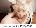 wet kitty   Shutterstock . vector #589660949