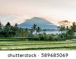 balinese rice field early... | Shutterstock . vector #589685069