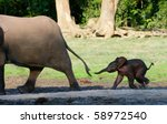 Stock photo africa forest elephant the small elephant calf runs for mum trying to seize its tail 58972540